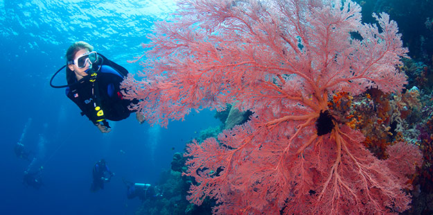 Wakatobi: Scuba Diving Vacation Packages